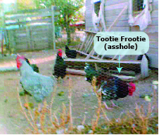 Tootie Frootie